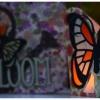 night-butterfly-shot