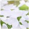 wedding-bouquet-svg-01