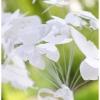 wedding-butterfly-bouquet-svg